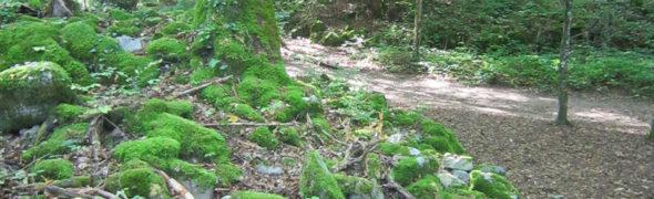 Sur les sentiers du Roc de Chère